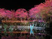 08.2/23 九族-夜櫻真的好美的啦!:1595624567.jpg