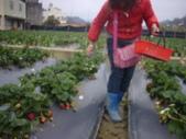 2008.2.9(初三)大湖採草莓:1943956025.jpg