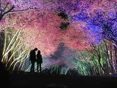 08.2/23 九族-夜櫻真的好美的啦!:1595624568.jpg