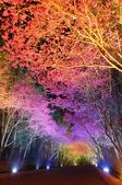 08.2/23 九族-夜櫻真的好美的啦!:1595624569.jpg