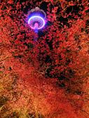 08.2/23 九族-夜櫻真的好美的啦!:1595624570.jpg