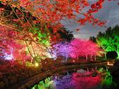 08.2/23 九族-夜櫻真的好美的啦!:1595624572.jpg