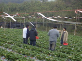 2008.2.9(初三)大湖採草莓:1943956035.jpg