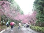 08.2/23 九族-夜櫻真的好美的啦!:1595624464.jpg