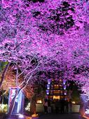 08.2/23 九族-夜櫻真的好美的啦!:1595624575.jpg