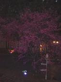 08.2/23 九族-夜櫻真的好美的啦!:1595624542.jpg