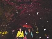 08.2/23 九族-夜櫻真的好美的啦!:1595624543.jpg