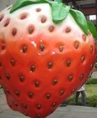 2008.2.9(初三)大湖採草莓:1943956045.jpg