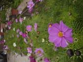 2008.2.9(初三)大湖採草莓:1943956046.jpg
