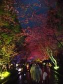 08.2/23 九族-夜櫻真的好美的啦!:1595624548.jpg