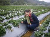 2008.2.9(初三)大湖採草莓:1943956049.jpg