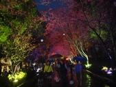 08.2/23 九族-夜櫻真的好美的啦!:1595624549.jpg