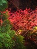 08.2/23 九族-夜櫻真的好美的啦!:1595624550.jpg