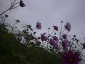 2008.2.9(初三)大湖採草莓:1943956053.jpg