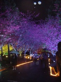 08.2/23 九族-夜櫻真的好美的啦!:1595624552.jpg