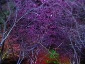 08.2/23 九族-夜櫻真的好美的啦!:1595624553.jpg