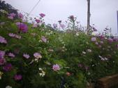 2008.2.9(初三)大湖採草莓:1943956056.jpg