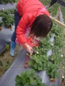2008.2.9(初三)大湖採草莓:1943956058.jpg