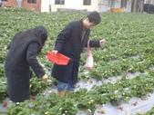 2008.2.9(初三)大湖採草莓:1943956006.jpg