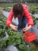 2008.2.9(初三)大湖採草莓:1943956010.jpg