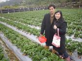 2008.2.9(初三)大湖採草莓:1943956015.jpg
