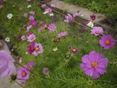 2008.2.9(初三)大湖採草莓:1943956018.jpg