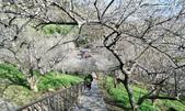 石門水庫梅園:DSC_8559.jpg