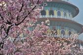 三芝 天元宮:DSC_5060.jpg