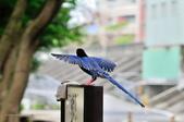 飛羽類~:DSC_0599.jpg