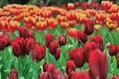 花卉試驗中心.:DSC_0755.jpg