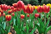 花卉試驗中心.:DSC_0783.jpg