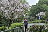 陽明山國家公園:_DSC2019.jpg