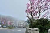 草山竹子湖~:DSC_3073.jpg