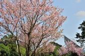 平菁街櫻花道路:DSC_4276.jpg