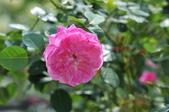 新生公園綠化園區:_DSC2620.jpg