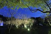 陽明山國家公園:_DSC6070.jpg