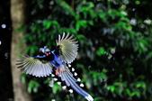 飛羽類~:DSC_0483.jpg