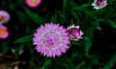 新生公園綠化園區:DSC_6614.jpg