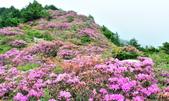 合歡山北峰步道:DSC_2295.jpg