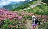 合歡山北峰步道:DSC_2350.jpg