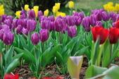 花卉試驗中心.:DSC_0760.jpg