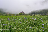 草山竹子湖~:_DSC6609.jpg