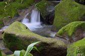 大屯溪瀑布:_DSC3335.jpg