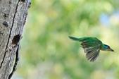 福志公園五色鳥:DSC_2790.jpg