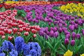 花卉試驗中心.:DSC_0736.jpg