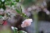 花卉試驗中心.:DSC_0825.jpg