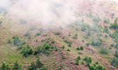 合歡山北峰步道:DSC_2276.jpg