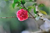 花卉試驗中心.:DSC_0872.jpg