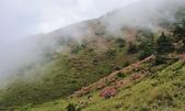 合歡山北峰步道:DSC_2291.jpg