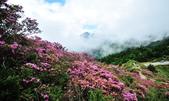 合歡山北峰步道:DSC_2333.jpg